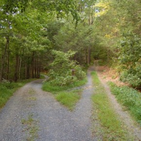The Road Not Taken by RobertFrost